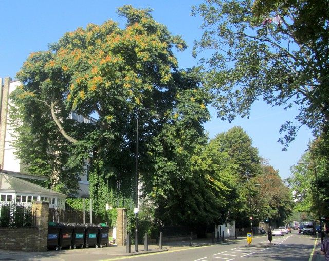 abbey road nw8