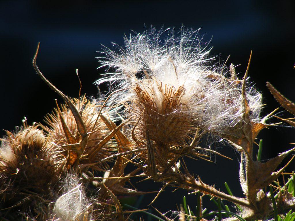 dried-flowers-11-september-2016